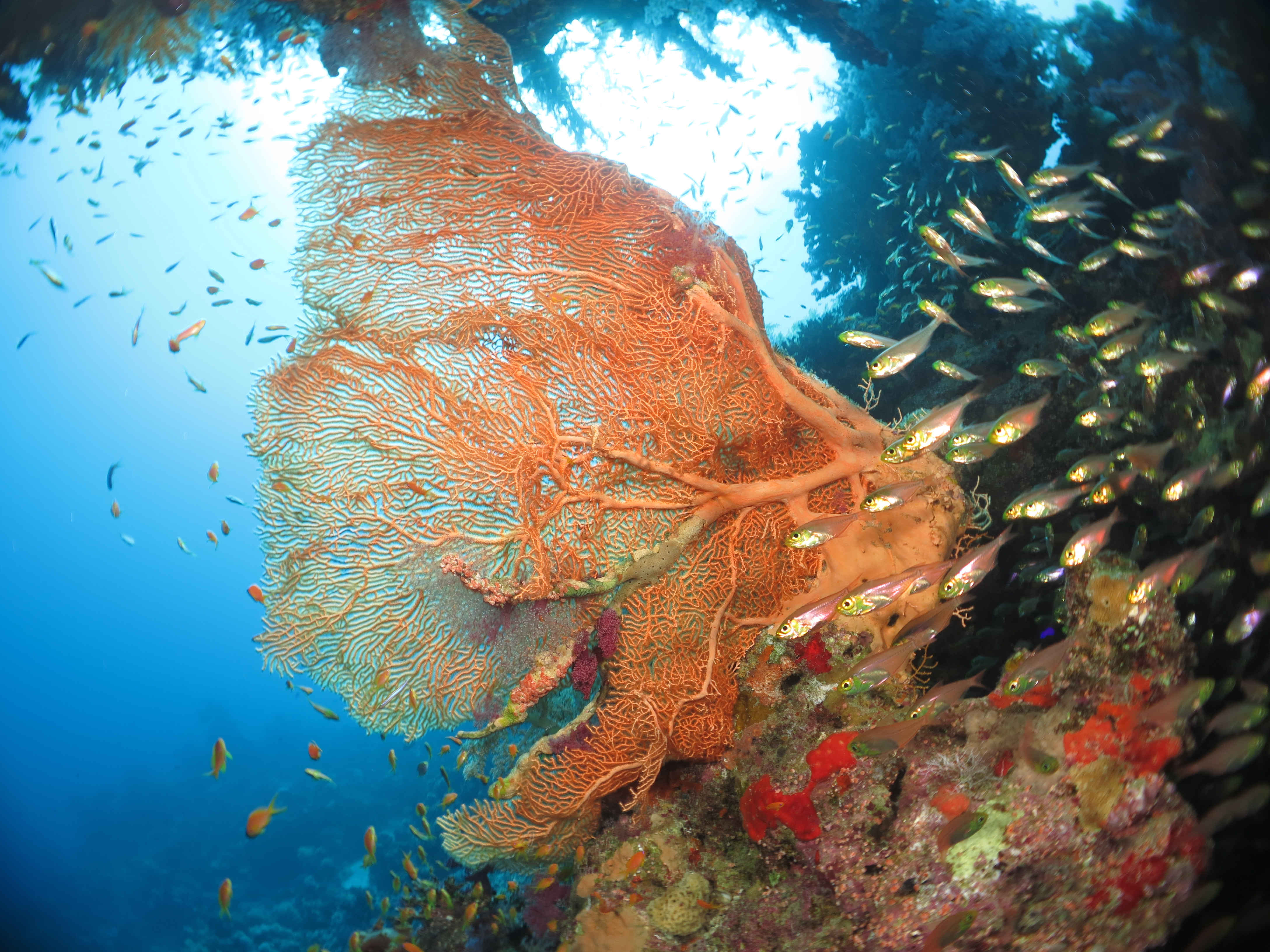 The coral reefs and colorful fishes deep under Red Sea water for diving in El Gouna